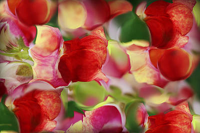 Photograph - Magnified Flower Abstract by Kathy M Krause