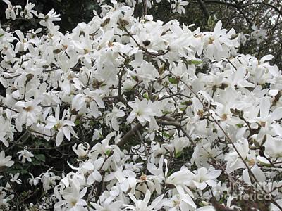 Photograph - Magnolia 6 by Rudi Prott