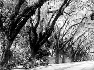 Photograph - Magnolia Ave by Amar Sheow