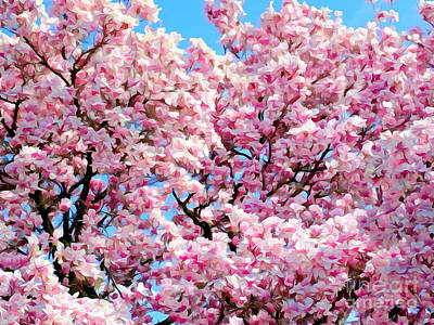 Photograph - Magnolia Beauty # 4 by Ed Weidman