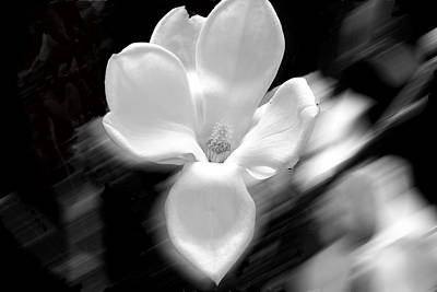 Magnolia Black And White Abstract Art Print