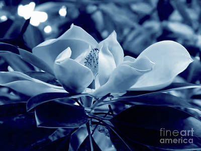 Photograph - Magnolia Blossom Cyan by D Hackett