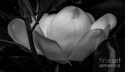 Digital Art - Magnolia Blossom by Elijah Knight