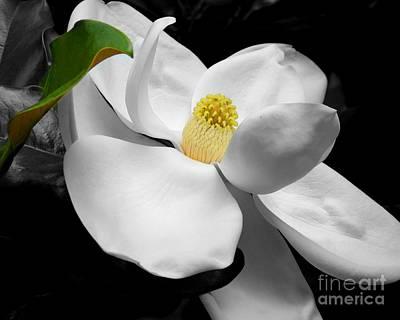 Photograph - Magnolia Blossom by Jai Johnson