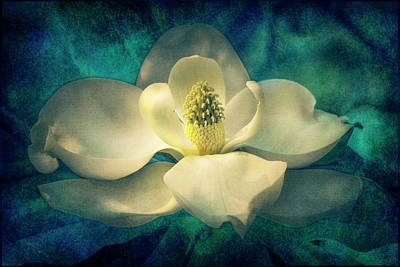 Digital Art - Magnolia Blossom by Sandra Selle Rodriguez