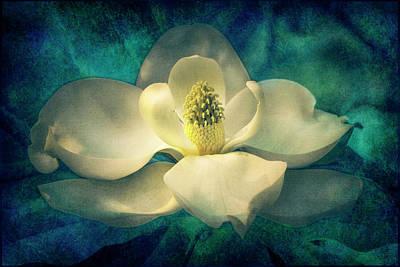 Digital Art - Magnolia Blossom by Sandra Selle Rodriguez