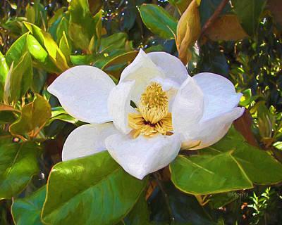 Photograph - Magnolia Blossom - Springtime Flowers by Rebecca Korpita