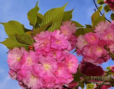 Photograph - Southern Blossoms by Bob Sample