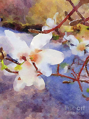 Photograph - Magnolia Blossoms by Chris Scroggins