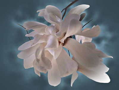 Photograph - Magnolia Blossoms by Judy Johnson