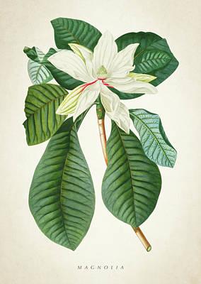 Botanical Gardens Digital Art - Magnolia Botanical Print Magnolia02 by Aged Pixel