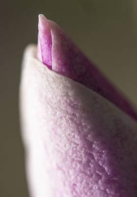 Photograph - Magnolia Bud by Steven Ralser