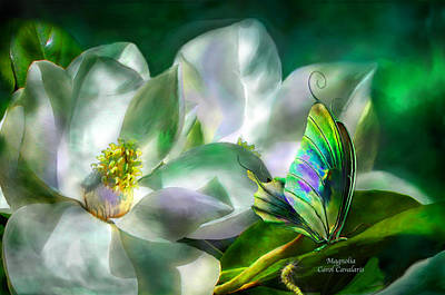 Butterfly Art Mixed Media - Magnolia by Carol Cavalaris
