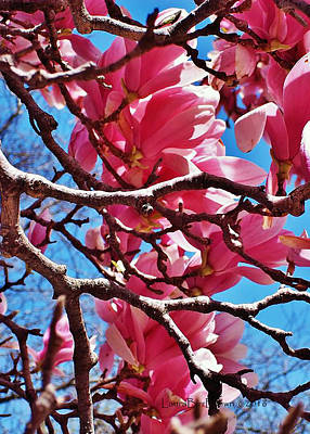 Magnolia Cluster Art Print by Laura Birr Brown