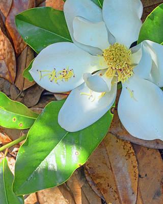 Photograph - Magnolia Corner by Larry Bishop
