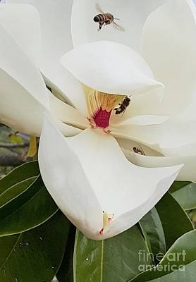 Magnolia Fans Art Print