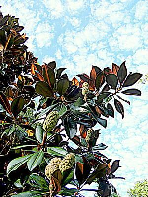 Photograph - Magnolia Finale by Nancy Kane Chapman