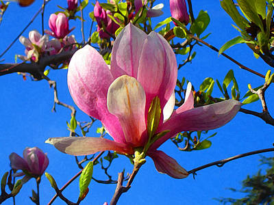 Painting - Magnolia Flower by Amy Vangsgard