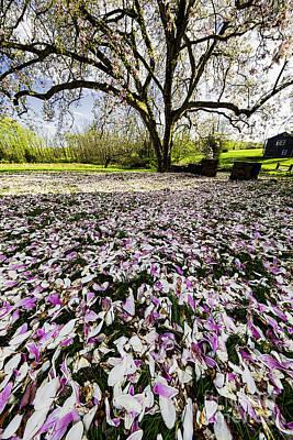 Magnolia Flower Carpet  Art Print