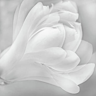 Photograph - Magnolia Flower Gray by Jennie Marie Schell