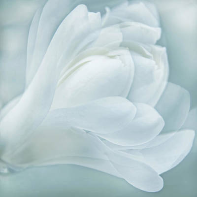 Photograph - Softness Of A Aqua Blue Magnolia Flower by Jennie Marie Schell