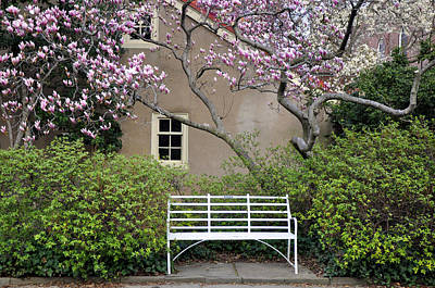 Photograph - Magnolia Garden 1 by Andrew Dinh