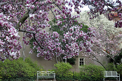 Photograph - Magnolia Garden 3 by Andrew Dinh