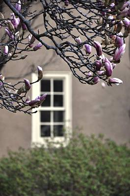 Photograph - Magnolia Garden by Andrew Dinh