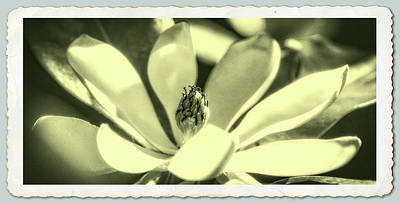 Photograph - Magnolia by Garry McMichael