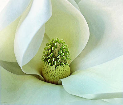 Photograph - Magnolia Grandiflora 3 by Deborah Smith