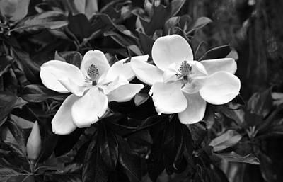 Photograph - Magnolia Grandiflora In Black And White by rd Erickson