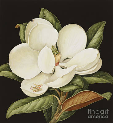 Arrangement Painting - Magnolia Grandiflora by Jenny Barron