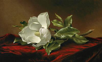 Humming Bird Painting - Magnolia Grandiflora by Martin Johnson Heade