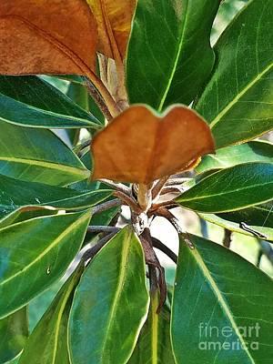 Photograph - Magnolia Green by Maria Urso