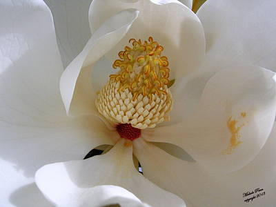 Photograph - Magnolia Happiness by Michele Penn