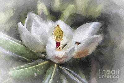 Digital Art - Magnolia Harvest by Georgianne Giese