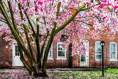Photograph - Magnolia House by Michael Arend