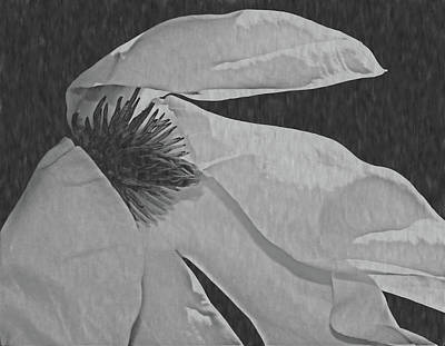 Photograph - Magnolia In Black And White by Karen Silvestri