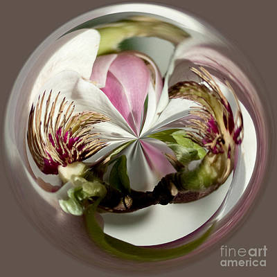 Photograph - Magnolia In The Round by Donna Sizemore
