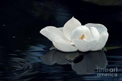 Peddle Photograph - Magnolia by Kendra Longfellow