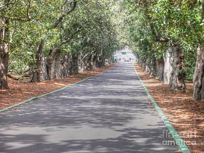 Masters Golf Photograph - Magnolia Lane by David Bearden