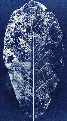 Magnolia Leaf Skeleton Art Print