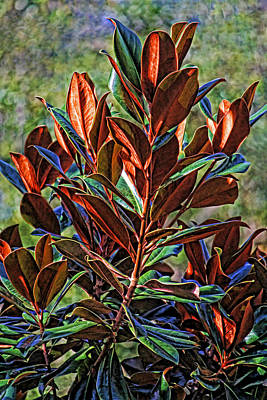 Photograph - Magnolia Leaves by HH Photography of Florida