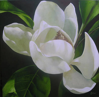 Magnolia Light Art Print by Chris Hobel