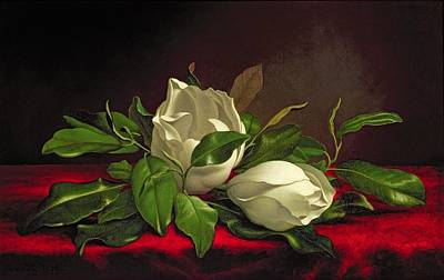 Floral Still Life Painting - Magnolia by Martin Johnson Heade