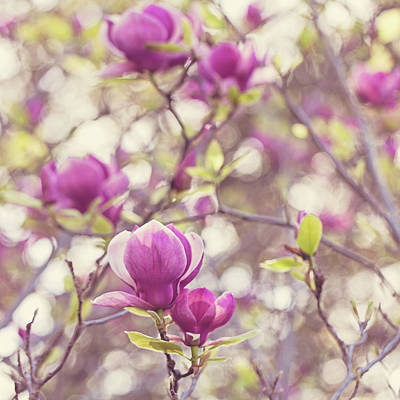 Photograph - Magnolia by Melanie Alexandra Price