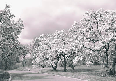 Photograph - Magnolia Memories by Jessica Jenney
