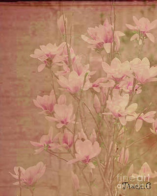 Art Print featuring the photograph Magnolia Nostalgia by Traci Cottingham