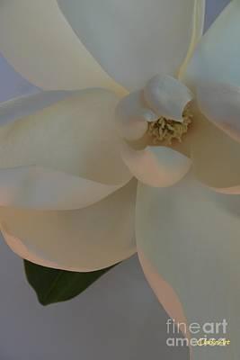 Moody Magnolia  Art Print