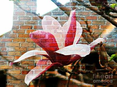Photograph - Magnolia On The Wall by Leanne Seymour